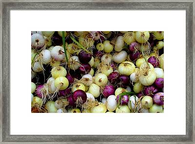 Onions Tri Color Framed Print by Brenda Pressnall
