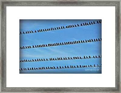Online Birding Framed Print