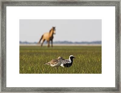 Onlooker Framed Print by Bob Decker