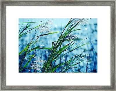 Only The Wind Knows Framed Print by Susanne Van Hulst