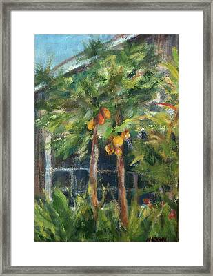 Onomea Papaya Framed Print by Amy  Markham