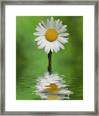 Framed Print featuring the photograph Oops Za Daisy by Rick Friedle
