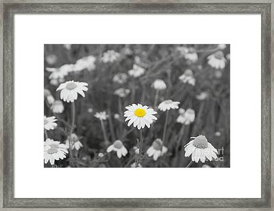 Framed Print featuring the photograph Oopsy Daisy by Benanne Stiens
