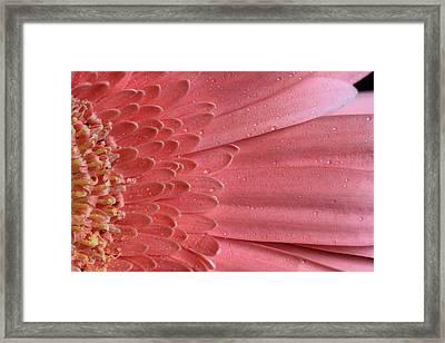 Oopsy Daisy Framed Print by Shelley Neff