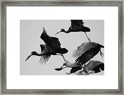 Open Bills On The Move Framed Print