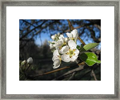 Open For Beesness Framed Print