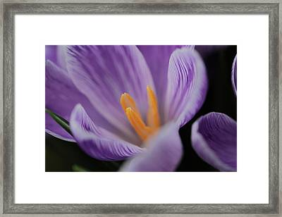Open For Business  Framed Print by Connie Handscomb