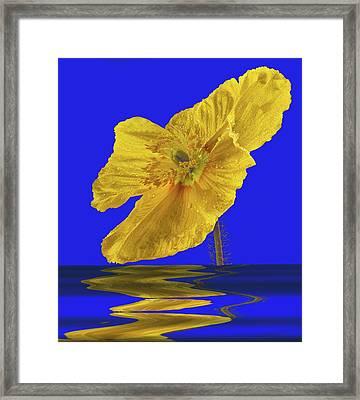 Open Iclandic Poppy Reflection Framed Print by Jean Noren