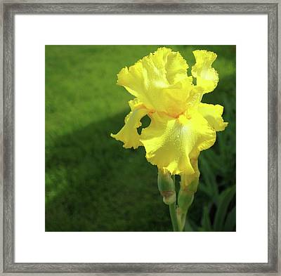 Framed Print featuring the photograph Open by Jane Autry