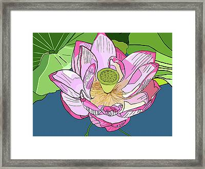 Open Lotus Framed Print