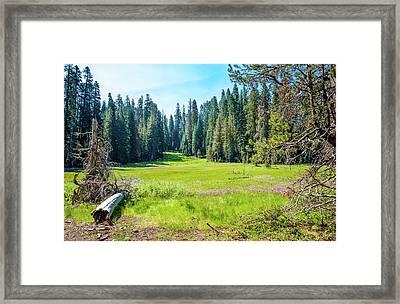 Open Meadow- Framed Print