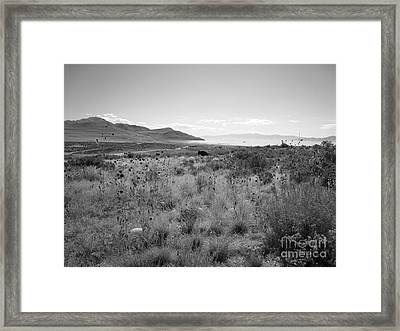 Open Range Framed Print by Lisa Schafer