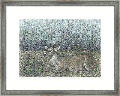 Open Season Framed Print by Sarah Kuhn