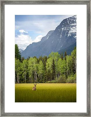Open Spaces // Glacier National Park  Framed Print