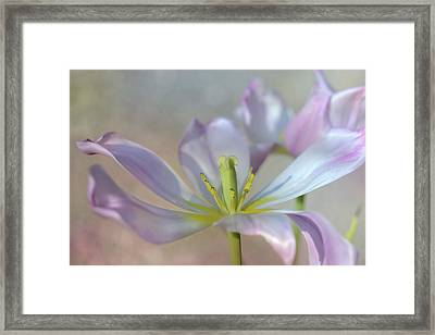 Framed Print featuring the photograph Open Tulip by Ann Bridges