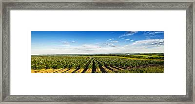 Framed Print featuring the photograph Open View by Gary Smith