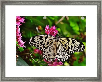Open Wings Framed Print