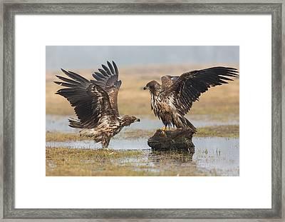 Open Wings Framed Print by Fabio Ferretto
