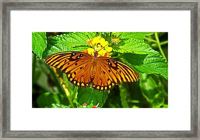 Open Wings Framed Print