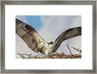 Framed Print featuring the photograph Open Wings by Robert Pilkington
