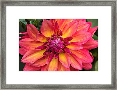 Opened To The World 4 Framed Print by Cendrine Marrouat