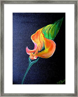 Framed Print featuring the painting Opening Cala Lily by Gary Smith