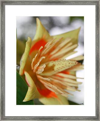 Opening Framed Print by Dawn M Brewer
