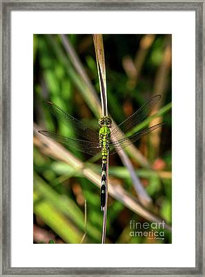 Framed Print featuring the photograph Openminded Green Dragonfly Art by Reid Callaway