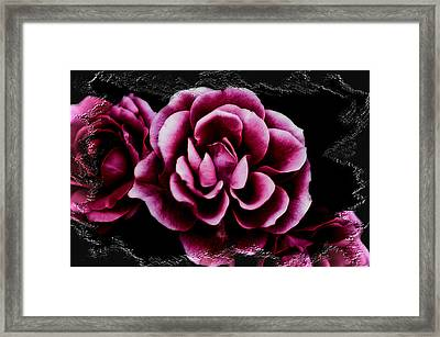 Ophelia's Roses Framed Print by Shelly Stallings