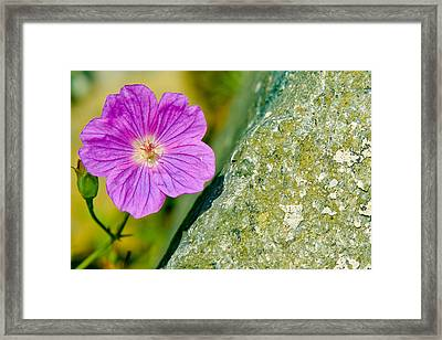 Opposites Attract Framed Print by Carl Jackson