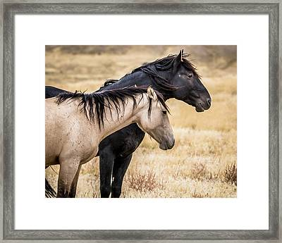 Opposites Attract Framed Print by Mary Hone