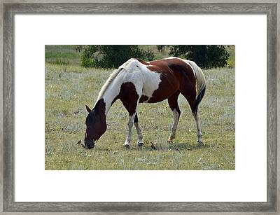 Opposites In Harmony Framed Print by Ken Smith