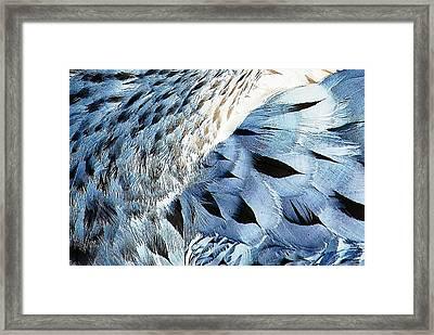 Blue Limpkin Framed Print