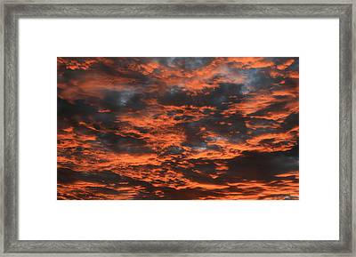Orang Delight Framed Print