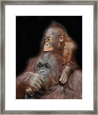 Orang-utan Mother And Baby Framed Print by Larry Linton