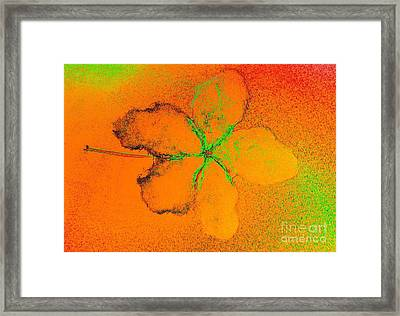 Orange Abstract Flower By Jasna Gopic Framed Print by Jasna Gopic