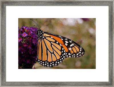 Orange And Black Beauty Framed Print by Beth Collins