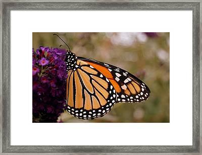 Orange And Black Beauty Framed Print