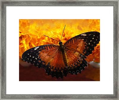 Orange And Black Butterfly Framed Print by Art Spectrum
