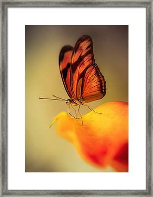 Orange And Black Butterfly Sitting On The Yellow Petal Framed Print by Jaroslaw Blaminsky