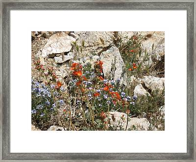 Orange And Blue Flowers Framed Print by Joan Taylor-Sullivant