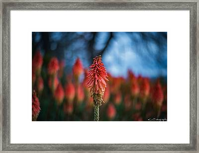 Orange And Blue Framed Print