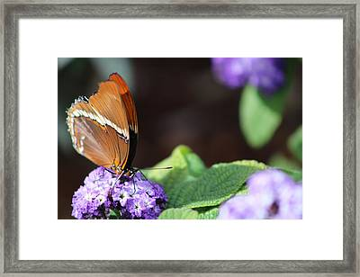 Orange And Brown Butterfly On Purple Framed Print