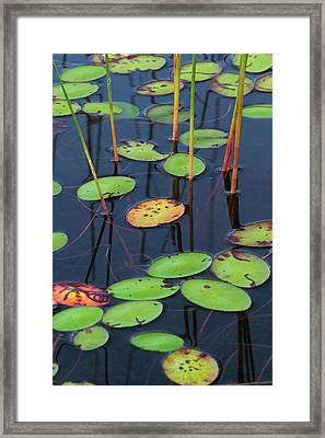 Framed Print featuring the photograph Orange And Green Water Lily Pads  by Juergen Roth