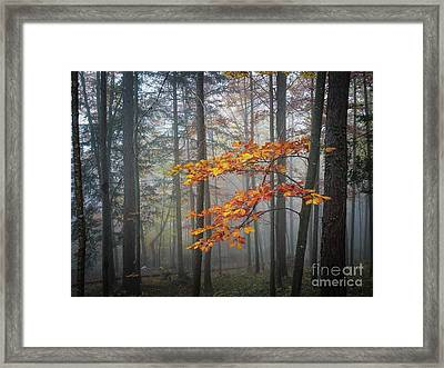 Orange And Grey Framed Print