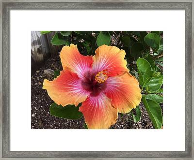 Orange And Red Beauty Framed Print