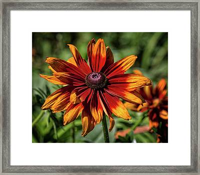 Framed Print featuring the photograph Orange And Red by Robert Pilkington