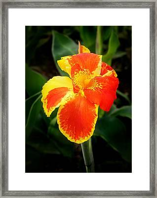 Orange And Yellow Canna Framed Print