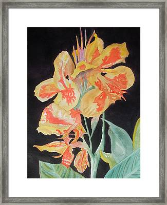 Orange And Yellow Canna Lily On Black Framed Print by Warren Thompson