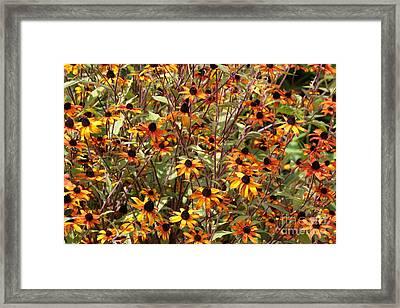 Orange And Yellow Coneflowers Framed Print